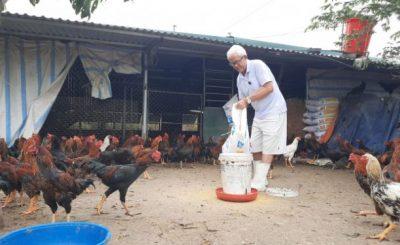 Ông Đỗ Đình Thế chia sẻ kinh nghiệm vỗ béo gà bán tết.
