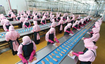 Chế biến gia cầm tại nhà máy C.P. Việt Nam
