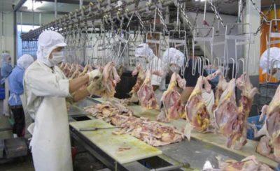 Xuất khẩu thịt gà vào thị trường Nhật Bản tạo ra nhiều cơ hội cho sản phẩm nông sản Việt Nam.